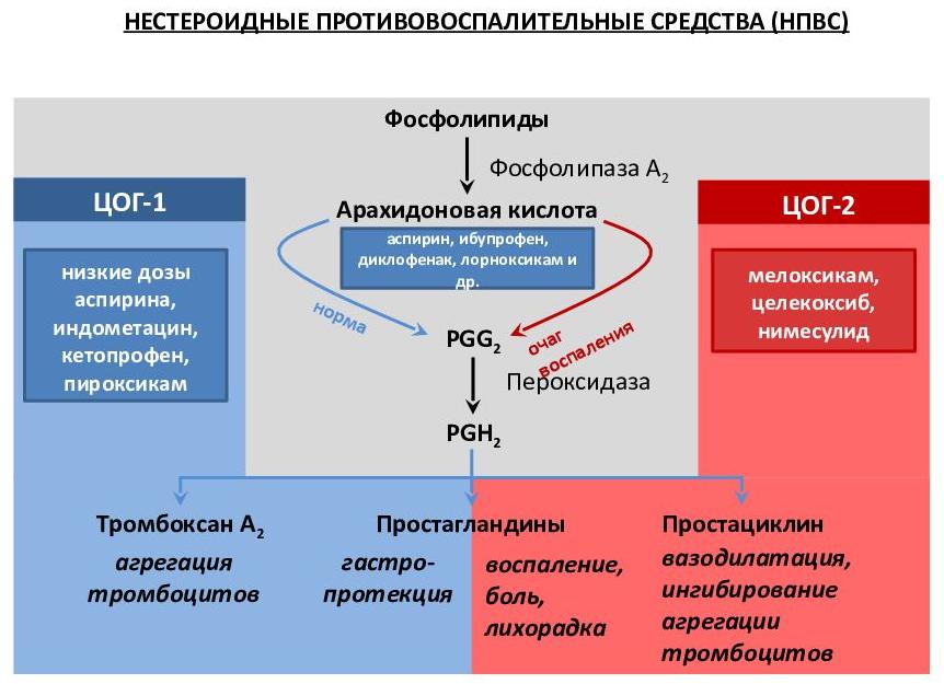 подавление ЦОГ-1 и ЦОГ-2