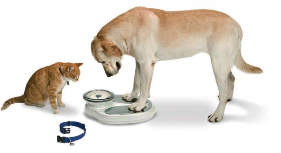 собака на весах